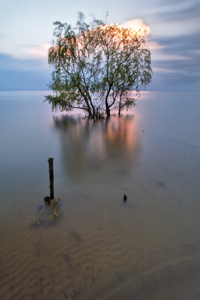 Artem Nosenko: tree water nature